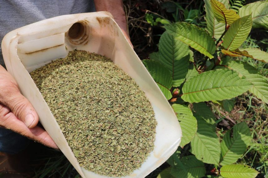 Concealed Enigma Behind Ideal Kratom For Stress And Anxiety